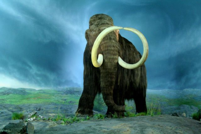 Wooly_Mammoth-RBC CC BY-SA 2.0 Tracy O.